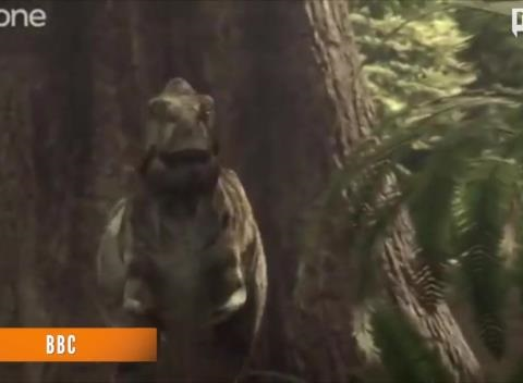 News video: Tyrannosaur Pack-Hunting Theory Aided By New Footprints