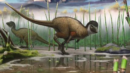 News video: All Dinosaurs May Have Had Feathers